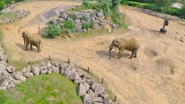 Basildon Standard: Spotted - Elephants in their enclosure at Colchester Zoo.
