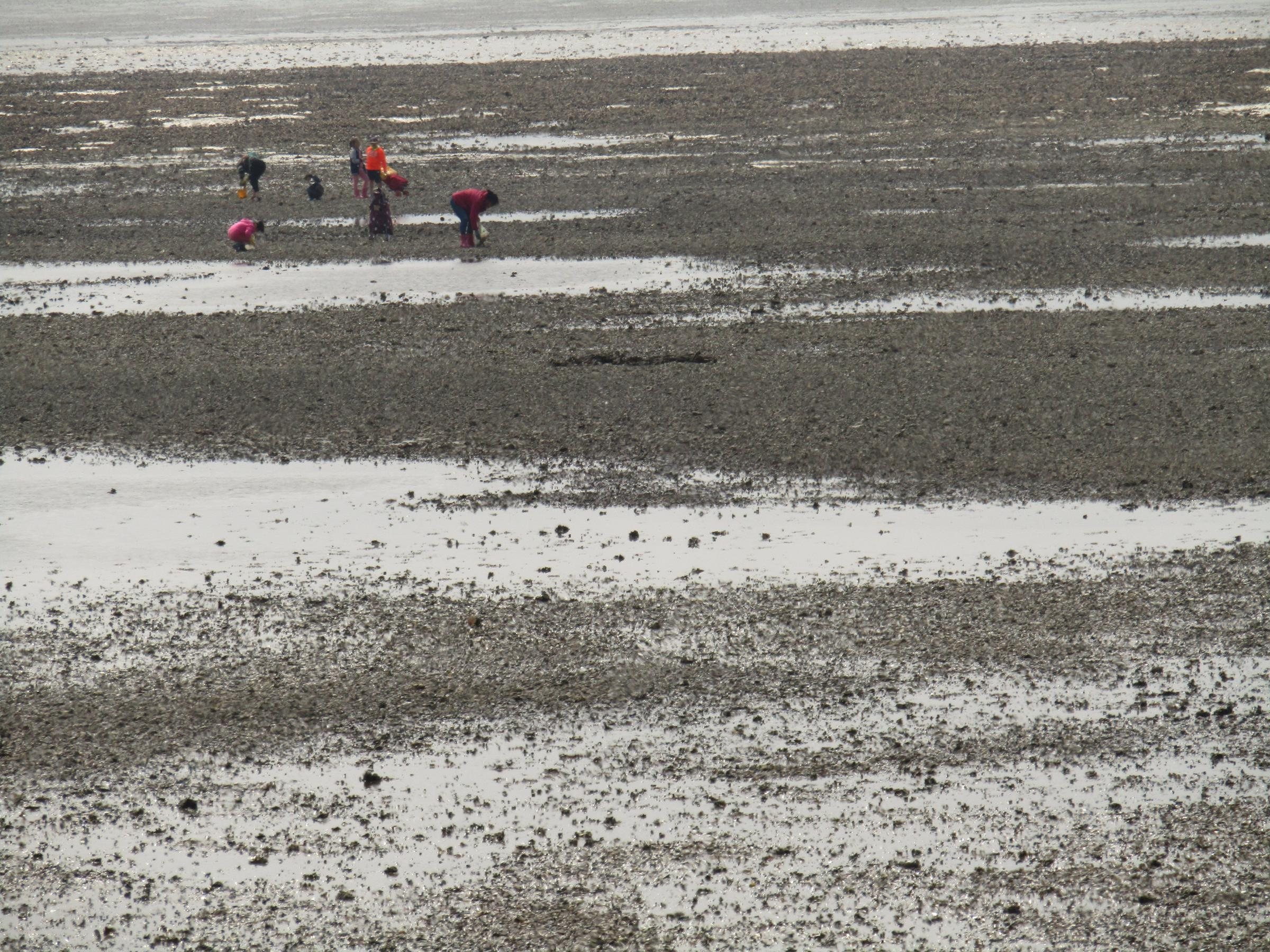 Concerns as big group seen harvesting shellfish illegally