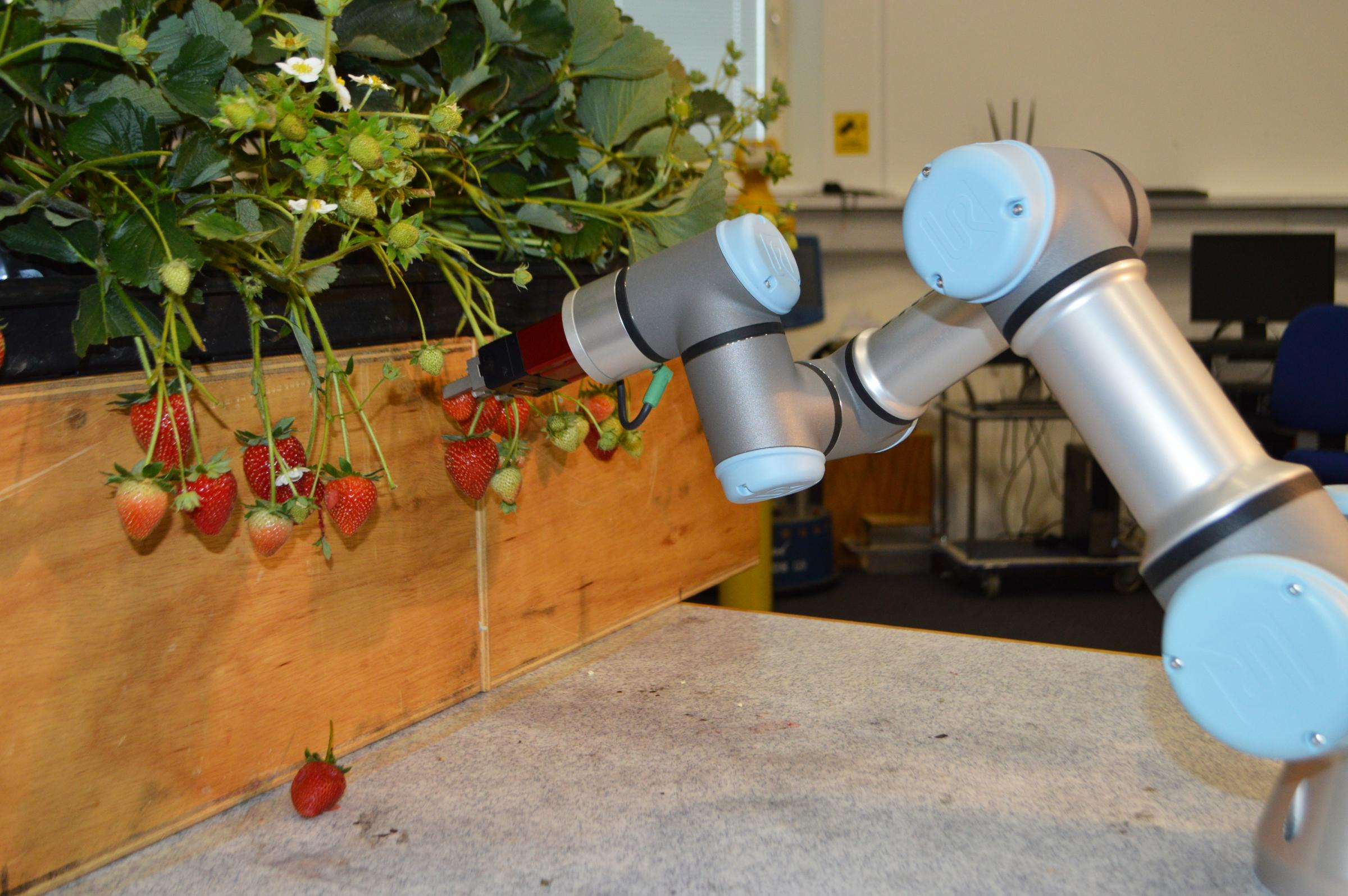 A robotic arm able to pick strawberries at Tiptree farms. Picture: University of Essex