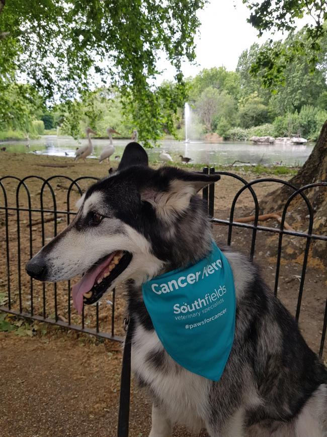 Zeus – who was chosen as the poster boy for Southfield's new national cancer campaign